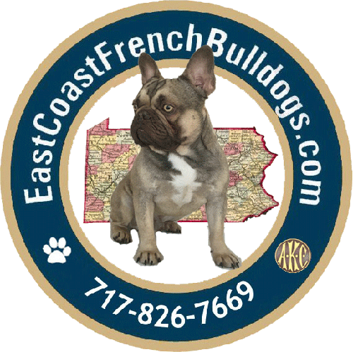 East Coast French Bulldogs