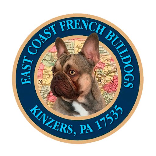 Home East Coast French Bulldogs
